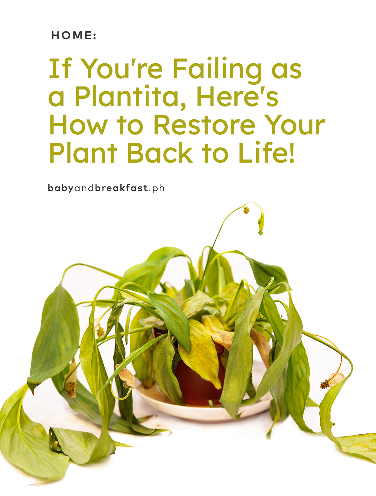 If You're Failing as a Plantita, Here's How to Restore Your Plant Back to Life!